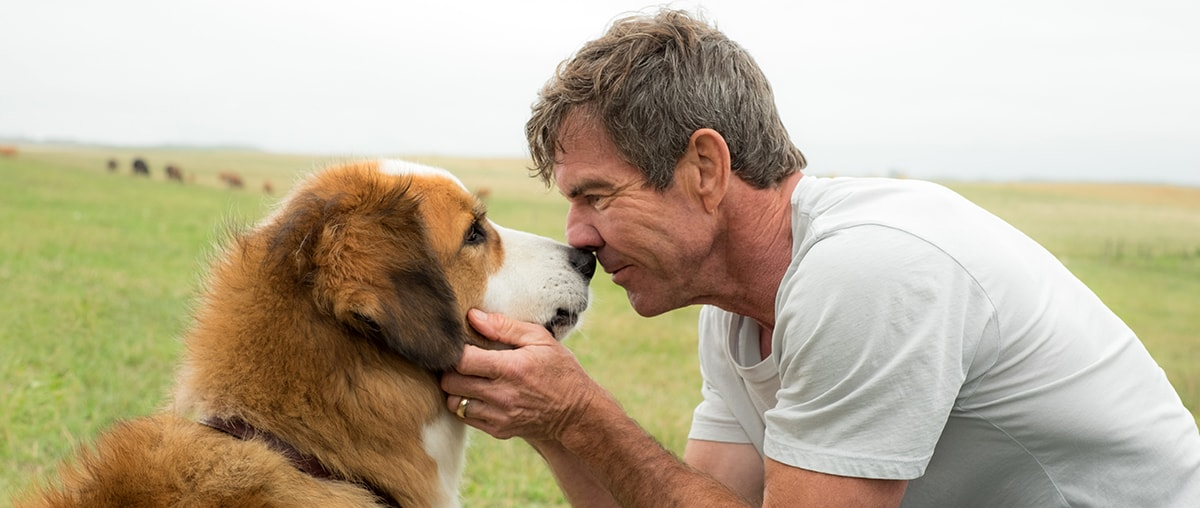 A Dogs Purpose Soundtrack Complete List Of Songs